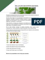 Vdocuments.site Que Es Moringa Oleifera