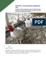 Elevage de poulets