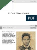 1.4 Partes del rostro.pdf