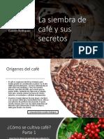 La siembra de café y sus secretos_Armando Nerio Guedez Rodríguez.pptx