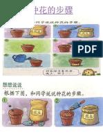 8 种花的步骤.pptx