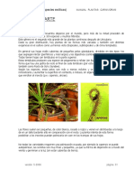Plantas Carnivoras Droseras Neocultivos
