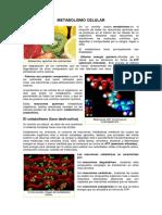 Metabolismo Celular