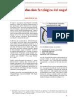 evaluacion fenologica del nogal.pdf