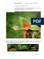Plantas_Carnivoras_ Venus_Dionaea_neocultivos.pdf