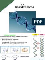 T.5.-Ácidos-nucleicos