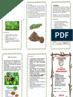 Triptico Planta Medicinal Chancapiedra