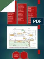 bioquímica  acetil CoA y NADPH.pptx