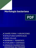 Estructura Bacteria