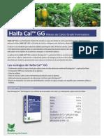 Haifa Cal GG_0