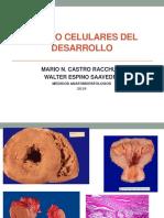 PRACTICA 04 - CAMBIOS CELULARES DEL DESARROLLO 2019.pptx