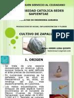 Cultivo de Zapallo Loche - Heber Luna Ucss