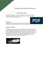 EIDER MICRO.docx