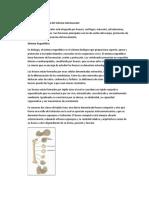 Sistema ostemuscular.docx