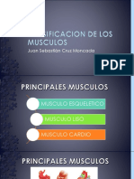 Clasificacion de Los Musculos
