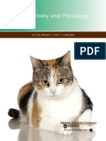 Cat Anatomy and Physiology