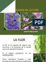 MORFOLOGIA DE LA FLOR.pptx jheane.pptx1.pdf