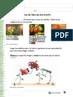 ciclo de planta 3°.pdf