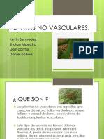 plantas no vasculares.pptx