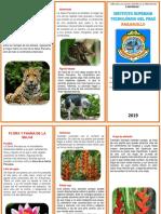 Triptico Flora y Fauna de La Selva