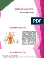 Sistemas Del Cuerpo