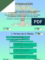 reino planta