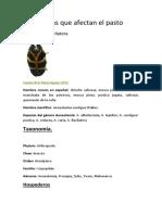 Plagas que afectan el pasto.docx