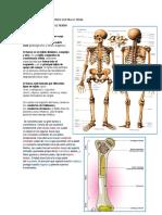 Transf. 4 Tejido Cartilaginoso y Oseo