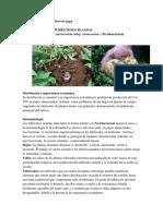 Aporte individual Fitopatologia.docx