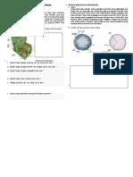 lks-jaringan-dan-organ-tumbuhan1.doc