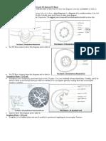 bio practical diagrams.docx