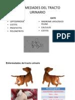 Manual Perros 4