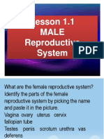 Science ppt Male Rep System 1.1.pptx