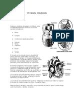 86974-El-Sistema-Circulatorio.doc