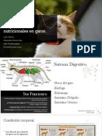 Requerimientos Nutricionales en Gatos