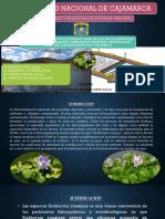 cálculo de costos de la PTAR fitorremediación con jacinto de agua