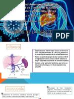VIRUS DE LA HEPATITIS 1.3.pptx