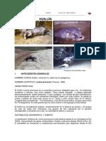 huillin(1).pdf