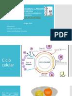 ciclocelular y mitosis.pptx