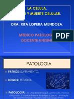 1 clas.1 semestre   lesion y muerte celular.pptx