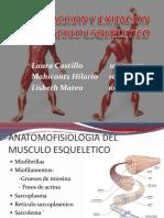 anatomia y fisiologia del musculo esqueletico