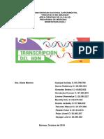 TEMA 23 ADN Y ARN