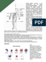 tejidos y partes del cuerpo
