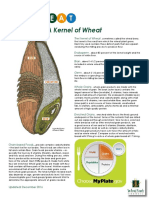 Wheat Kernel Composition