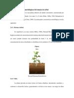 Morfología Del Tomate de Árbol