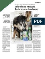 Perritos Mascotas Lavar Dientes
