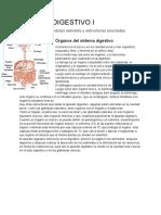 Teorico Digestivo I