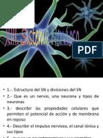 Sistema Nervioso conocimientos básicos (Nivel Preparatoria)
