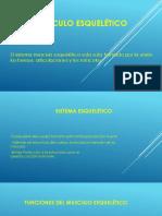Musculo esquelético power (1).pptx