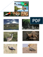 Aves de Huacarpay Imagenes.docx.Exe